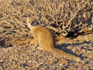 y mongoose by hole